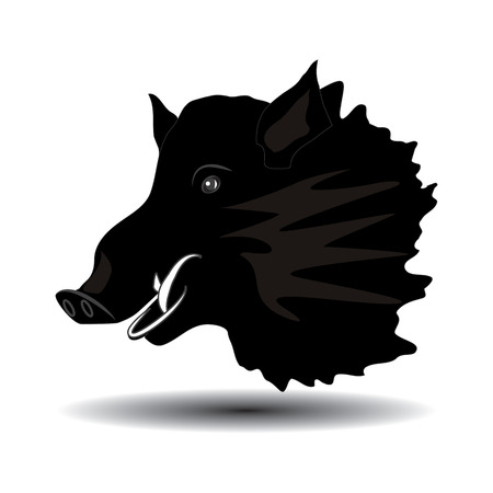 hunters: Wild boar head close-up of black sketch isolated on white background, art creative modern vector illustration. Hunters Banner