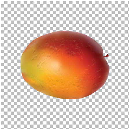 Mango - isolated on a transparent background, realistic - art creative modern vector