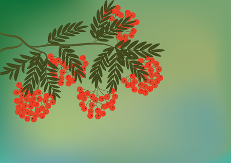 Branch with bunch of red mountain ash - on abstract light green background - art creative illustration vector