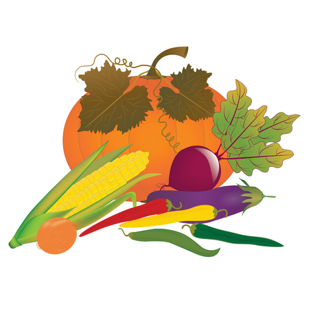 pumpkin with leaves and vegetables - eggplant, corn, pepper bitter, onion, beetroot - isolated on white background - art creative vector