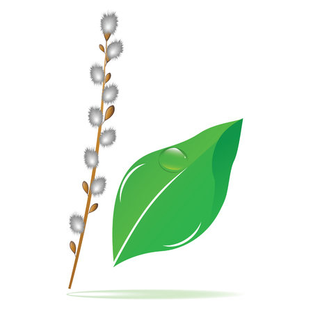 Willow branch, green leaf with a dew drop - isolated on white background - vector art. Spring poster. Vettoriali