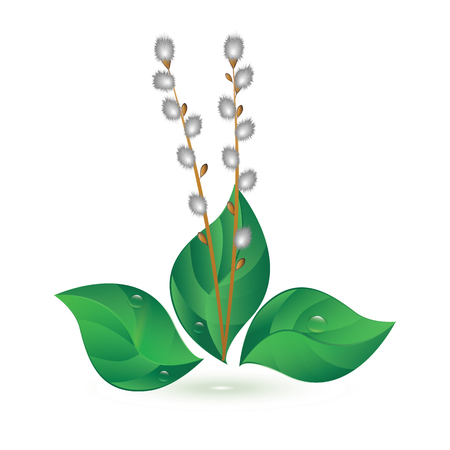 Spring bouquet - Willow bud, green leaves - isolated on white background - art vector