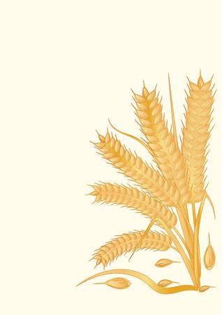 Wheat ears - isolated on light background - art vector Illustration