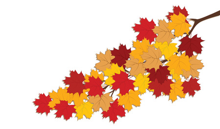 Branch with autumn yellow-red leaves - isolated on white background - art vector