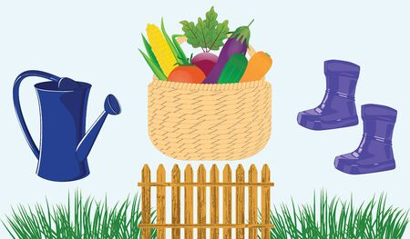 Basket wicker with vegetables, blue watering can and rubber boots, paling, grass - isolated on white background - vector