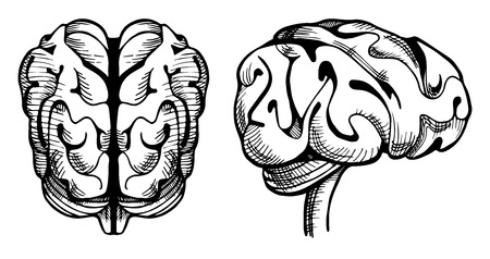 Vector illustration of a brain in old-fashioned vintage engraving style. Illustration
