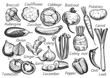 Vector illustration of vegetables with labels in hand-drawn ink style. Broccoli, cauliflower, cabbage, beetroot, potatoes, aubergine, zucchini, carrot, onion, celery, ginger, garlic, tomatoes, cucumber, pepper, chili, leek Illustration