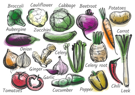 Vector illustration of vegetables with labels in hand-drawn ink style with watercolor background. Broccoli, cauliflower, cabbage, beetroot, potatoes, aubergine, zucchini, carrot, onion, celery, ginger, garlic, tomatoes, cucumber, pepper, chili, leek