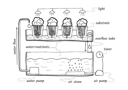Vector illustration sketch of ebb and flow hydroponic system for herbs and lettuce with labels.