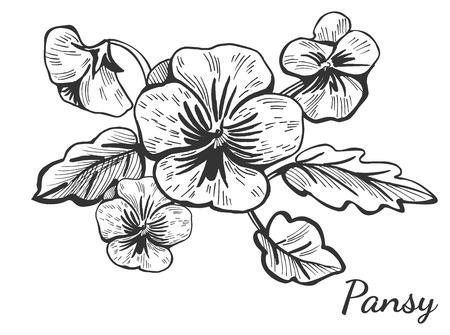 Vector Illustration eines Hand gezeichneten Stiefmütterchenblumenbusches. Vintage Zeichenstil Bouquet. Standard-Bild - 94780330