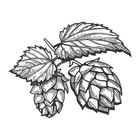 Illustrazione vettoriale di un luppolo con ramo di foglie. Disegnata a mano in stile incisione vintage.