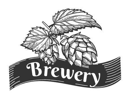 Beer brewery vector illustration emblem or label with hops. Hand drawn vintage engraving style.