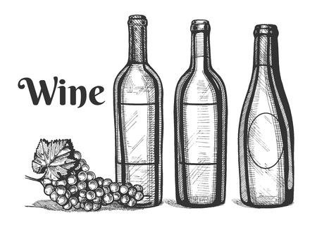 Vector illustration of a wine bottles and grapes bunch. Vintage engraving style.