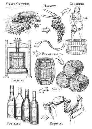 Ilustración de vector de proceso de elaboración del vino. Todas las etapas: cultivo de la uva, vendimia, triturado, prensado, fermentación, crianza, embotellado, degustación, bebida. Estilo de grabado dibujado a mano vintage. Ilustración de vector