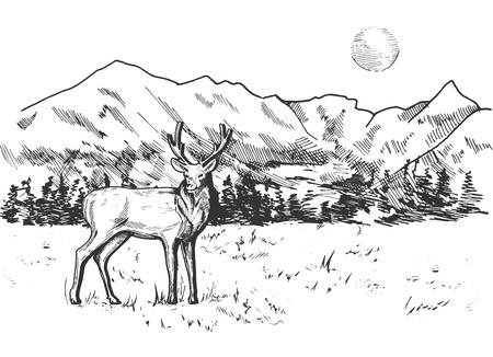 Vector illustration of a deer in mountain and pine forest landscape panorama. Vintage engraving style.  イラスト・ベクター素材