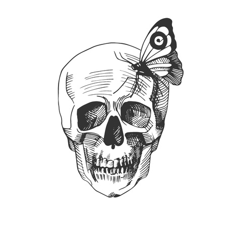 Vector illustration of a skull with a sitting on it butterfly. Vintage hand drawn engraving monochrome style. Illustration