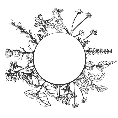 Vector illustration of herbal composition with round place for text with golden frame. Hand drawn vintage engraving style.