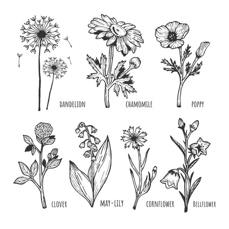 Vector illustration of a different field spring flower set. Dandelion, chamomile, poppy, clover, lilies of the valley, cornflower, bell. Hand drawn sketchy doodle outline style.
