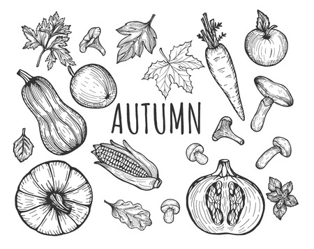 Vector illustration of the autumn seasonal menu fruits and vegetables set. Pumpkin top, sliced, squash, carrot, apple, forest mushrooms, fall leaves, ear of corn. Hand drawn doodle sketch style. Illustration