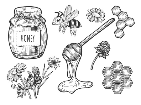Vector illustration of a honey set. Jar with cloth and rope, bee, field flowers, spoon, honeycomb. Hand drawn doodle style.
