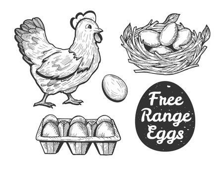 Ilustracja wektorowa zestawu jaj z wolnego wybiegu. Kura, jajko, papierowa taca, gniazdo. Vintage ręcznie rysowane kreskówka linotyp Grawerowanie stylu. Ilustracje wektorowe