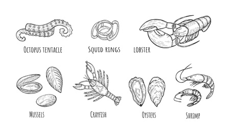 Vector illustration of seafood icons set. Octopus tentacle, squid rings, lobster, mussels, crayfish, oyster, shrimp. Vintage hand drawn style.