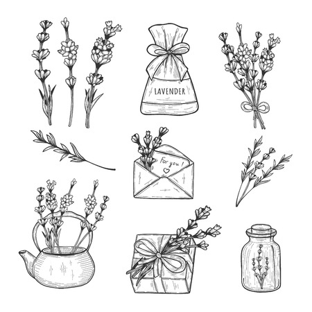 Vector illustration of lavender herb set. Branch, flowers, bouquet, bush, pouch, fragrance, present decoration, tea, envelope, bottle. Vintage hand drawn doodle style. Illustration