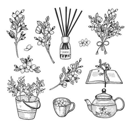 Vector illustration of jasmine herb set. Branch, flowers, bush, bouquet, fragrance, diffuser, book, tea, tea cup, pot, teapot, bucket, decoration. Hand drawn doodle style. 일러스트