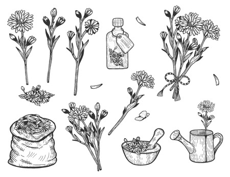 Vector illustration of calendula herb set. Branch, flowers, bush, bouquet, fragrance, pouch, treatment, remedy, mill, watering can, bag. Hand drawn vintage style. 스톡 콘텐츠 - 125576909