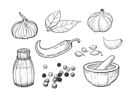 Vector illustration of spices set. Onion, laurel leave, chili pepper, garlic head, clove, salt, whole pepper peas, cardamom, stone spice grinder. Hand drawn outline sketch style.