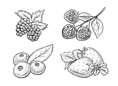 Vector illustration of berries set. Strawberry, raspberry, blueberry, blackberry in a sketchy doodle hand drawn style.