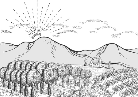 Vector illustration of vineland with farm on the background and mountains above, sunset or sunrise in the village. Vintage hand drawn style