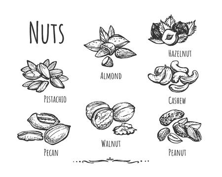 Ilustracja wektorowa zdrowej, zdrowej żywności, zestaw przekąsek. Różne rodzaje obranych i pokruszonych orzechów, takich jak pekan, orzech włoski, arachidowy, pistacja, orzech nerkowca, migdał, orzech laskowy. Styl Vintage ręcznie rysowane.