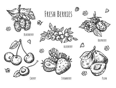 Vektorillustration des Fruchtbotaniksatzes. Realistische Ansicht von Erdbeeren, Himbeeren, Kirschen, Blaubeeren, Brombeeren, Pflaumenzweigen mit Blättern. Vintage handgezeichnete Stil.