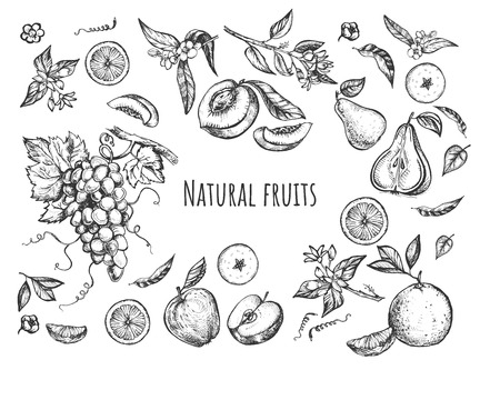 Vector illustration of fruits and blossom trees flowers set. Juicy fresh apples, pears, grapes, peaches, oranges, apricots whole, sliced and halved. Vintage hand drawn style.