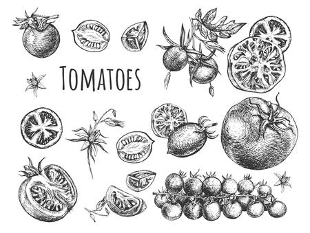Illustrazione vettoriale di set di pomodori freschi maturi. Raccolta di pomodori di diverse varietà come ciliegino, tondi, a prugna su ramo, tagliati, a fette, a metà e interi. Stile vintage disegnato a mano.