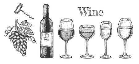 Vector illustration of wine set. Different types of glasses for red and white, bottle, corkscrew, grapes bunch. Vintage hand drawn style. Illustration