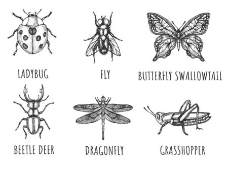 Vector illustration of insects set. Ladybug, fly, swallowtail butterfly, deer beetle, dragonfly, grasshooper. Vintage hand drawn style.