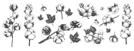 Composition de fleurs, feuilles et branches de coton. Plante de champ agricole délicate prête pour la récolte. Style de gravure de gravure dessinée à la main vintage. Vecteurs