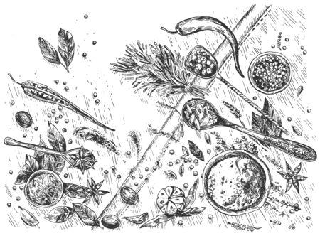 Illustration vectorielle du marché des épices nature morte. Différentes herbes aromatiques, branches et feuilles de liaisons, noix, ail et piment. Ingrédients culinaires. Style vintage dessiné à la main.