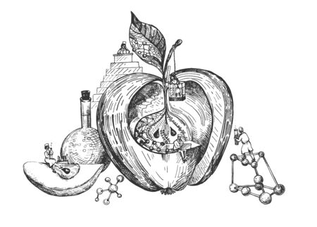 Vector illustration of GMO apple. Scientists are modifying fruit food in lab. Genetic molecular experiments. Vintage hand drawn style.