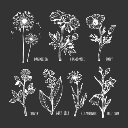 Vector illustration of a different field spring flower set on black background. Dandelion, chamomile, poppy, clover, lilies of the valley, cornflower, bell. Hand drawn sketchy doodle outline style.