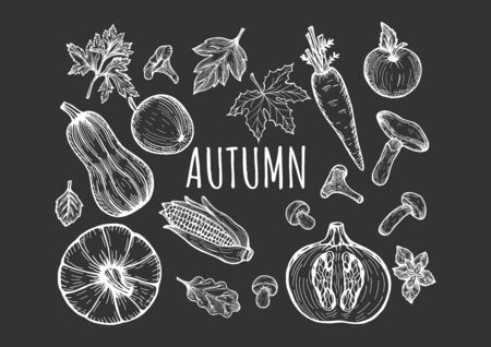 Vector illustration of the autumn seasonal menu fruits and vegetables set. Pumpkin top, sliced, squash, carrot, apple, forest mushrooms, fall leaves, ear of corn. Hand drawn doodle sketch style.
