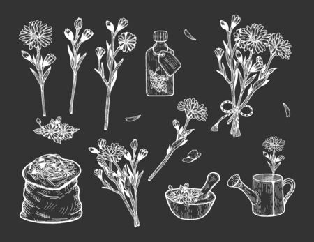 Vector illustration of calendula herb set. Branch, flowers, bush, bouquet, fragrance, pouch, treatment, remedy, mill, watering can, bag. Hand drawn vintage style.