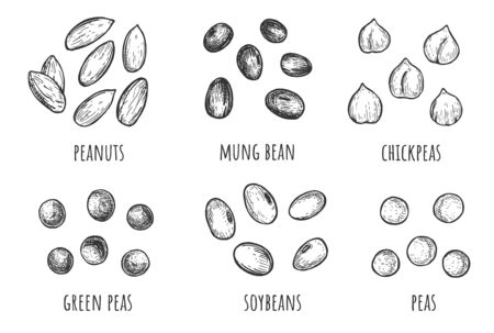 Vector illustration of beans and lentils set. Different types of grains. Peanuts, mung, chickpeas, green peas, soybeans, soy. Vintage hand drawn style.