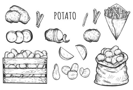 Vector illustration of fresh and cooked potato icons set. Whole vegetable, circles, slices, chips, sack, French fries cone, wooden box. Organic meal. Food processing. Vintage hand drawn style.