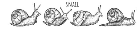 Vector illustration of cute snails set. Clam insect with shell house side and three quarters view. Vintage hand drawn style. Ilustracja