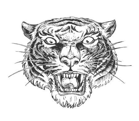 Vector illustration of aggressive wild growling tiger face. Angry dangerous wildcat animal head design. Vintage hand drawn style.