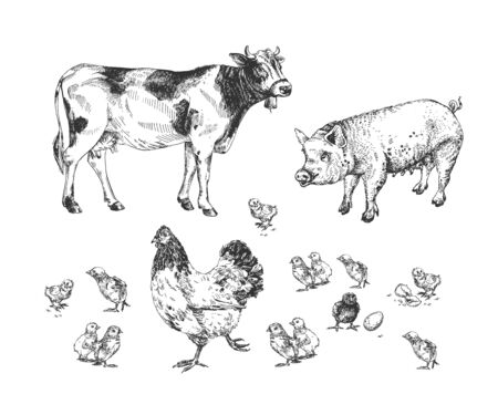 Vector illustration of farm animals set. Hen and chisken, pig, cow. Natural eco farming. Vintage hand drawn style. Stok Fotoğraf - 144985478