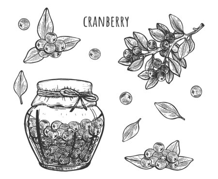 Vector illustration of cranberry jam or sauce in glass jar set. Berries, plant, leaves. Vintage hand drawn style.